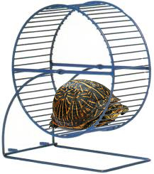 turtle-in-a-hamster-wheel